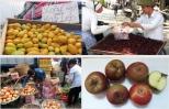 Bốn loại quả Tàu nhầm tưởng hàng Việt:Ăn quanh năm