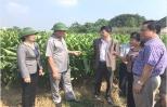 Đạt 500 - 600 triệu đồng/ha, dân Chí Tân đổi đời nhờ trồng nghệ