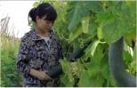 Từ A-Z khi bón phân trong sản xuất nông nghiệp hữu cơ