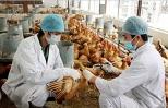 Kháng kháng sinh trong chăn nuôi