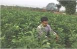 Những nông dân năng động ở Liên Nghĩa