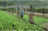 Bỏ lúa trồng rau, nông dân ở đây thu 20 triệu đồng mỗi tháng