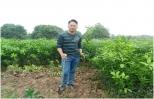 Hưng Yên nhộn nhịp mùa ươm trồng cây giống