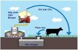 Quản lý chất thải chăn nuôi tổng hợp