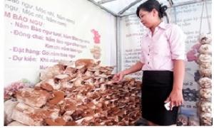 """Nấm linh chi Việt Nam bị nấm linh chi Trung Quốc """"tấn công"""""""