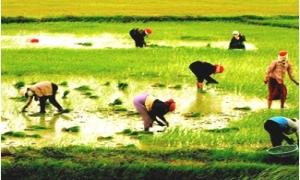 Chính sách tín dụng phát triển nông nghiệp...
