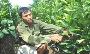 Nông dân xã Liên Nghĩa thành triệu phú nhờ nghề ươm cây giống