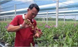 Đầu tư tiền tỷ khởi nghiệp với vườn lan Dendro