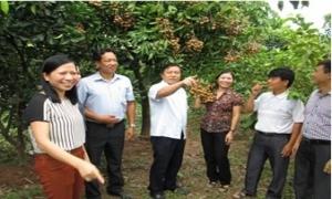 Nông dân cần hợp tác chặt chẽ hơn nữa thành CLB, chi hội ngành nghề, tổ hợp tác, HTX