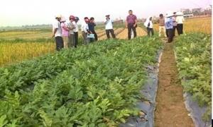 Bí kíp trồng dưa, bí bò đất