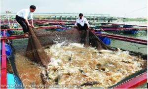 """""""Bí kíp"""" nuôi cá lồng trên sông, hồ chứa"""