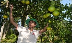 Vốn Hội - trợ lực giúp nhà nông làm giàu