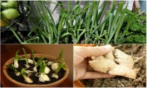 3 loại gia vị thiết yếu bạn nên tự trồng ngay hôm nay
