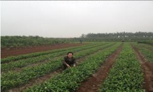 Nông dân xã Mễ Sở thành triệu phú nhờ nghề ươm cây giống