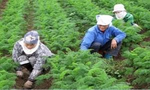 Nhà nông hết cảnh mua chịu vật tư nông nghiệp