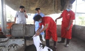 Máy ép tách phân giải quyết môi trường chăn nuôi heo