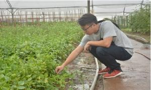 Nhóm 8X 'đánh liều' thuê đất trồng làm rau sạch