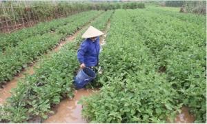 Hưng Yên: Ổn định sản xuất và đời sống sau bão