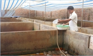 Huy động các nguồn lực phát triển quỹ Hội, Quỹ hỗ trợ nông dân