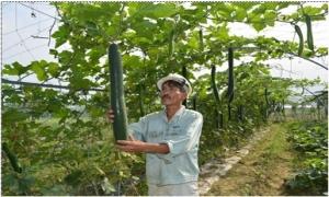 Sống sung túc nhờ trồng rau sạch