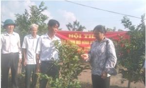 Hội thảo: Mô hình trồng nhãn, bưởi, ổi tại xa Tiền Phong, huyện Ân Thi.
