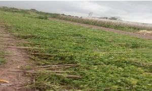 Hội viên nông dân Hưng Yên khẩn trương khắc phục hậu quả sau bão.