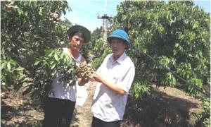 Gương nông dân làm kinh tế giỏi:Đất không phụ người