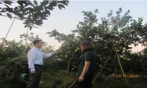 Nông dân Phan Văn Thức  xã Minh Châu: thu nhập trên 250 triệu từ  trông cây có múi.