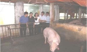 Hội viên nông dân năng động trong phát triển kinh tế