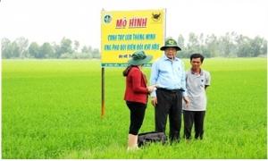 Cần giảm mật độ gieo sạ lúa hơn nữa