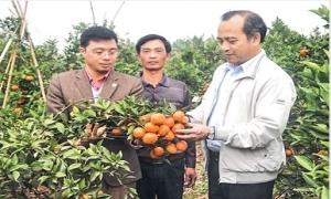 Những mô hình nông nghiệp hiệu quả ở Hưng Yên