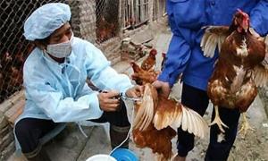 Công điện khẩn về ngăn chặn virus cúm A