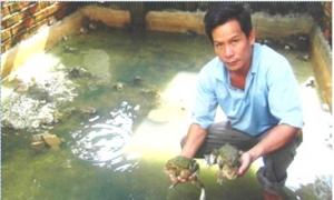 Làm giàu nhờ kết hợp nuôi ếch, cá rô và cá trê lai