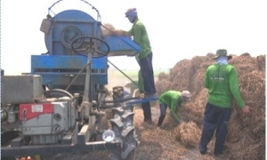 Trồng rau muống lấy hạt - lợi nhuận cao hơn nhiều trồng lúa