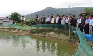 Khẳng định vai trò của Hội Nông dân tại vùng chuyên canh
