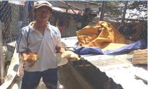 Kỹ sư thủy sản bỏ việc về nuôi gà cảnh cho thu nhập cao
