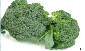 Cho lợi của bông cải xanh