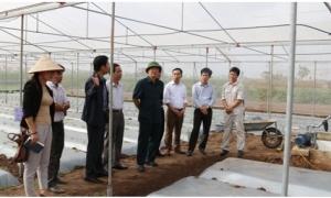 Mô hình sản xuất rau sạch theo công nghệ Nhật Bản tại thành phố Hưng Yên