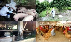 Hưng Yên đầu tư 22,5 tỷ đồng phòng, chống dịch bệnh gia súc, gia cầm