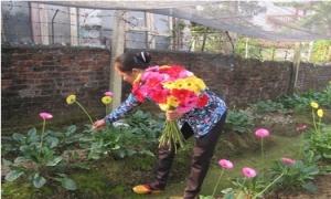 Kinh nghiệm thâm canh hoa đồng tiền vụ xuân