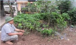 Chiết, ghép nhân giống cây ăn quả, thu 4 - 5 triệu đồng/mỗi tháng