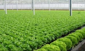 Các biện pháp quản lý sâu và dịch hại trong sản xuất rau hữu cơ