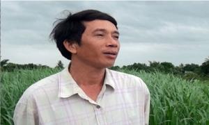 Cử nhân kinh tế nghỉ việc để trồng cỏ nuôi bò