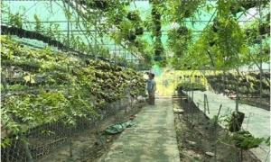 Một hộ ở Mỹ Hào thu tiền tỉ từ ghép hoa lan