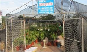 Ấn tượng làng chuyên canh tác hoa cây cảnh trên chậu, thu 300 - 400 tỷ đồng/năm ở Văn Giang
