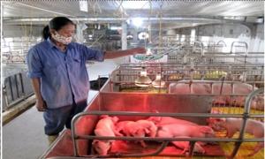 Bảo đảm chất lượng giống vật nuôi