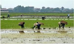Hưng Yên: Bổ sung kinh phí dồn thửa đổi ruộng