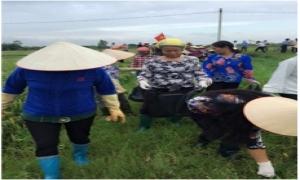 Phát động ra quân thu gom vỏ bao bì thuốc bảo vệ thực vật trên đồng ruộng xã Phương Chiểu