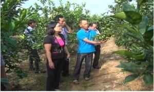 Hiệu quả từ chuyển đổi cây trồng ở xã Chỉ Đạo