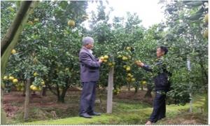 Hợp tác xã sản xuất rau củ, quả và dịch vụ thương mại Đồng Thanh (huyện Kim Động) giúp nông dân nâng cao thu nhập